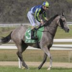 The Mist heads to Nowra