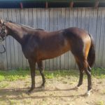 Adelaide Filly makes her Debut