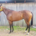 Filly gets a Royal Name